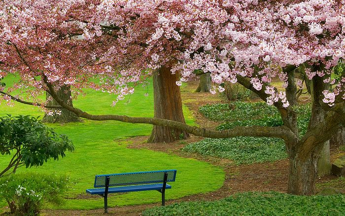 HDTV Widescreen Wallpapers of Beaitiful Nature (Vol.4) - Garden Seat with
