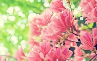 Flowers in Dreams : Elegant Floral Photography 2560*1600