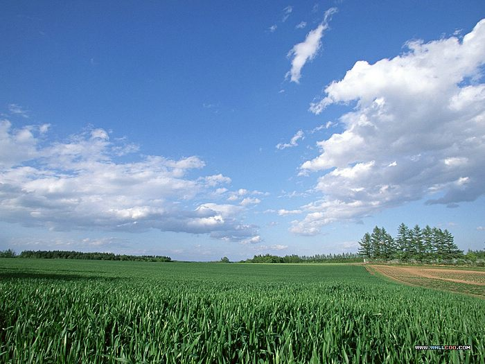 Perfect country field under blue sky - Wallpaper of vast country field,