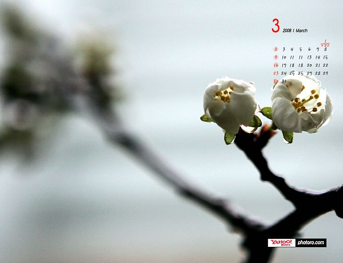 Image Description : March calendar: Spring blooming flowers wallpaper,